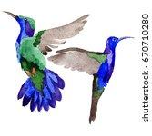 sky bird colibri in a wildlife... | Shutterstock . vector #670710280