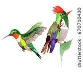 sky bird colibri in a wildlife... | Shutterstock . vector #670710430