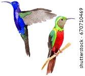 sky bird colibri in a wildlife... | Shutterstock . vector #670710469