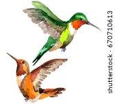 sky bird colibri in a wildlife... | Shutterstock . vector #670710613