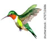 sky bird colibri in a wildlife... | Shutterstock . vector #670712686