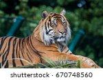 the bengal tiger  panthera... | Shutterstock . vector #670748560