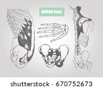 human body anatomy. medical... | Shutterstock .eps vector #670752673