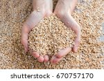 concept handful dry rolled... | Shutterstock . vector #670757170