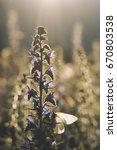 beautiful summer background... | Shutterstock . vector #670803538
