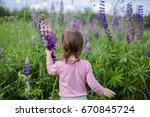 toddler girl exploring lupines... | Shutterstock . vector #670845724