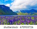 scenic summer nature landscape... | Shutterstock . vector #670933726
