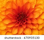 Orange Dahlia Petals Macro ...