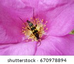 interesting beetle on a... | Shutterstock . vector #670978894