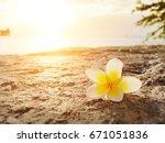 frangipani  plumeria flower on... | Shutterstock . vector #671051836