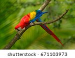 red parrot scarlet macaw  ara... | Shutterstock . vector #671103973