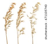 set of dry oat ears isolated on ... | Shutterstock . vector #671105740