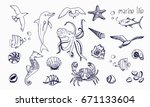 sea creatures isolated on white ... | Shutterstock .eps vector #671133604