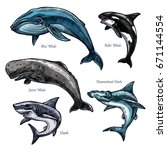 whales and sharks icons set of... | Shutterstock .eps vector #671144554