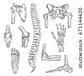 human joints and body parts... | Shutterstock .eps vector #671144620