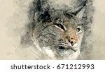 lynx. watercolor background | Shutterstock . vector #671212993