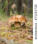 Small photo of Mushroom porcini in the grass in a pine forest