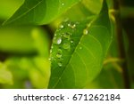 drops with water | Shutterstock . vector #671262184