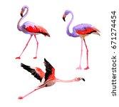 Sky Bird Flamingo In A Wildlif...