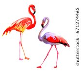 sky bird flamingo in a wildlife ... | Shutterstock . vector #671274463