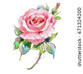 watercolor sketch of a rose... | Shutterstock . vector #671324200