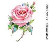 watercolor sketch of a rose...   Shutterstock . vector #671324200
