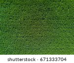 Aerial View Of Corn Field