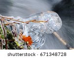 Plant Trapped In Ice