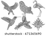 collection of hand drawn  birds.... | Shutterstock .eps vector #671365690