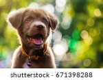 Stock photo portrait of happy puppy dog with foliage bokeh background 671398288