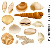 Realistic Seashell Collection...