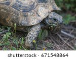 the spur thighed tortoise  or... | Shutterstock . vector #671548864