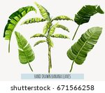 beautiful hand drawn botanical... | Shutterstock .eps vector #671566258