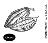 cocoa bean. hand drawn sketch... | Shutterstock .eps vector #671566666