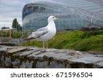 A Proud Albatross Stands On A...