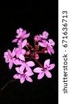 flowers | Shutterstock . vector #671636713