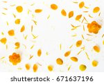orange petals of globe flowers... | Shutterstock . vector #671637196