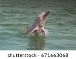pink dolphin  jumping  at... | Shutterstock . vector #671663068