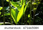 blooming tropical plant | Shutterstock . vector #671665084