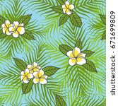 tropical plumeria white flowers ... | Shutterstock .eps vector #671699809