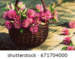 Clover Flowers In A Basket....