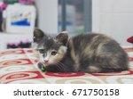 cute kitten sleeping on a red... | Shutterstock . vector #671750158