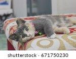 cute kitten sleeping on a red... | Shutterstock . vector #671750230
