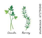 fresh green leaves coriander...   Shutterstock .eps vector #671754340