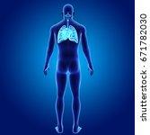 respiratory system posterior...   Shutterstock . vector #671782030
