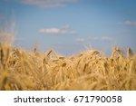 barley field  blur  close up of ...   Shutterstock . vector #671790058