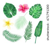 set of tropical flowers  palm... | Shutterstock .eps vector #671791300