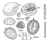 Set Of Vector Tropical Fruits ...