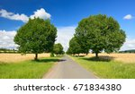 avenue of linden trees  tree... | Shutterstock . vector #671834380