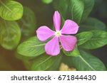 pink flower and green leaves in ... | Shutterstock . vector #671844430